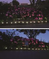 Plant and Border Solar Light String