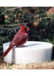 Super Solar Sipper Bird Watering Station
